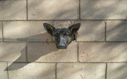 Saved! Puppy Stuck in Wall