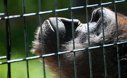 Miserable Indoor Zoo in Bangkok Sparks Controversy