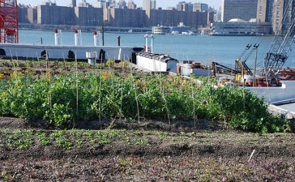 From Small Seeds, Urban Farms Grow