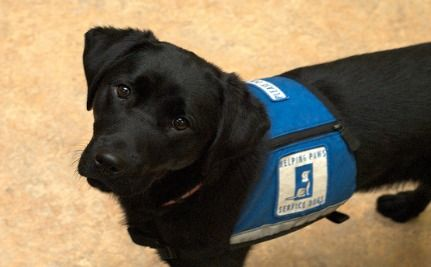 12-year-old Epileptic Denied Service Dog in School