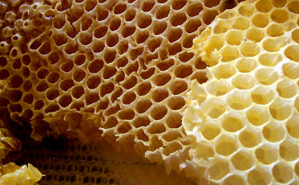 Honey Laundering May Mask Dangerous Contaminants
