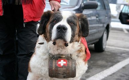 Swiss Town Threatens to Kill Dogs Over Taxes Due