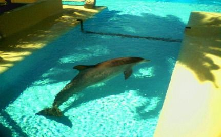 "Las Vegas Casino Operates ""Dolphin Death Pool"""