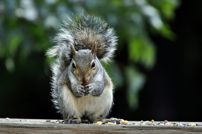 Go Nuts for Squirrel Appreciation Day