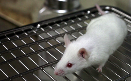 Hundreds of Mice Killed for Beauty Treatment