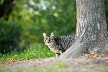 Fish & Wildlife Plan Threatens Cats' Lives