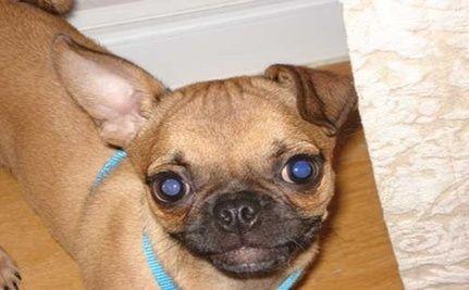 Watch Puppy Bowl VII on Sunday