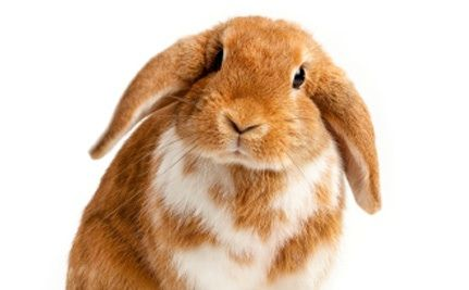 Cosmetic Testing On Animals Ain't Pretty (Plus How to Shop Cruelty-Free)