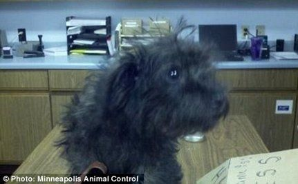 Update: Woman Who Tried To Mail Puppy – Won't Get Him Back