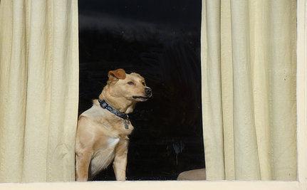 Pets Abandoned As Americans Leave Egypt