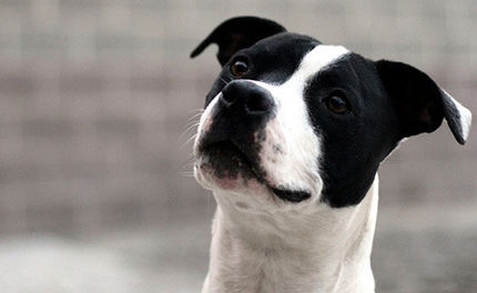 Should Michael Vick's Bad Newz Kennels Be Turned into a Rehab Center?