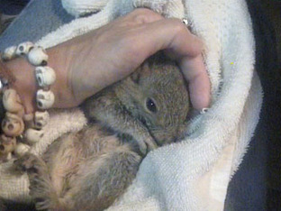 Rescue of the Week: Maryland Woman Saves Squirrel