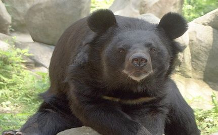 Chinese Bear Bile Company Applies to Shenzhen Stock Exchange