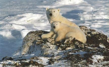 Forget The Oscars: It's International Polar Bear Day!