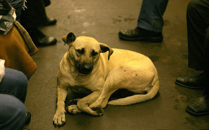 Moscow's Homeless Dogs Won't Be Deported