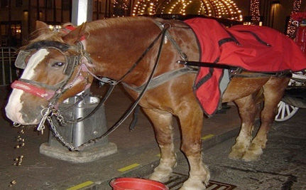 Are New York City Horse Carriages Taking YOU for a Ride?