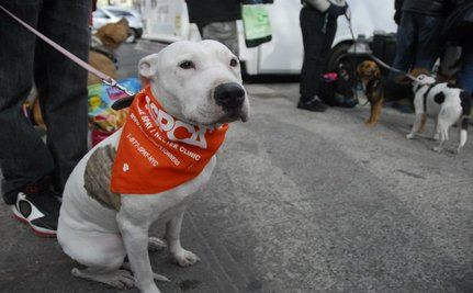 NYC Spay Day Success! (VIDEO)