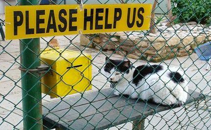 """Kill the Kitty"" Shouts Hempstead New York Shelter Worker"