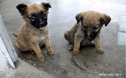 Romanian Parliament Moves to Legalize Euthanizing Stray Dogs