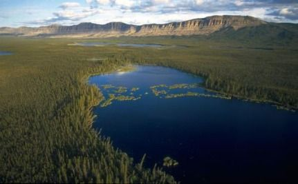 Scientists: Protecting Canada's Boreal Forest Is A Global Priority