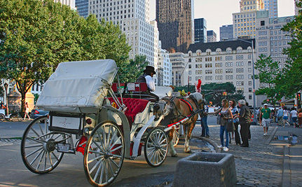 "Oliva Munn Asks: What Does Supporting Horse-Drawn Carriages ""Say About You?"""