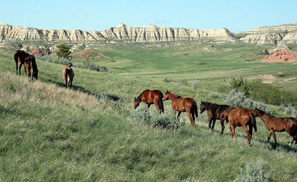 BLM Taking Comments on New Wild Horse and Burro Management Plans