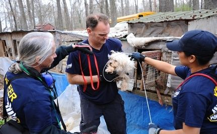 120 Dogs Seized From Unlicensed Tennessee Puppy Mill (Video)