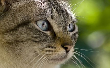 Big Win for Feral Cats in U