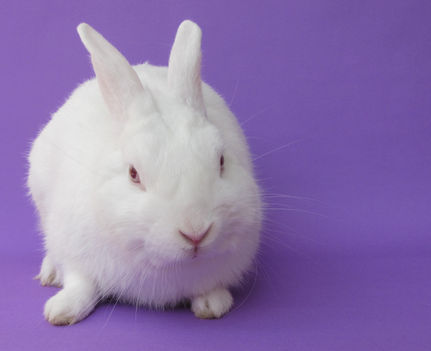 Easter Is No Treat For Pet Bunnies