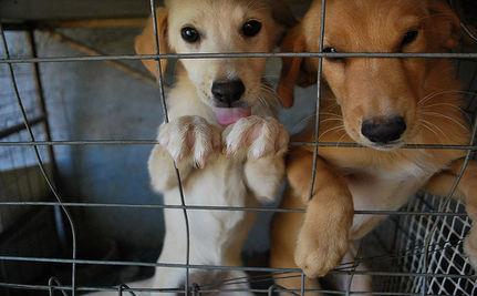 Take Action: Help Sentence An Animal Abuser