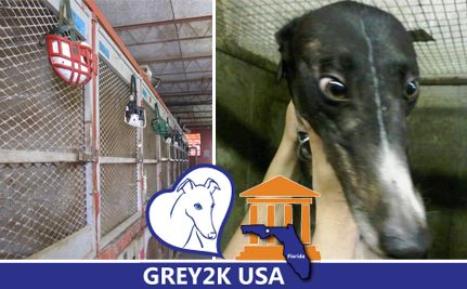 Join the Virtual Lobby Day for Greyhounds