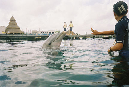 Rescue Mission For Captive Dolphins In Indonesia
