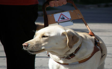 Free Eye Exams For Service Dogs
