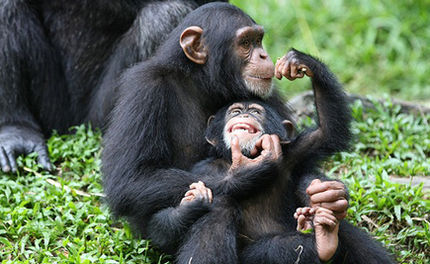 Support the Great Ape Protection and Cost Savings Act
