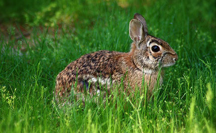 23,000 Bunnies Slaughtered in Easter Hunt