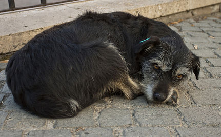 Take Action Against Romania's Stray Dog Slaughter