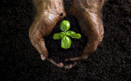 Got Soil? Celebrate Compost!