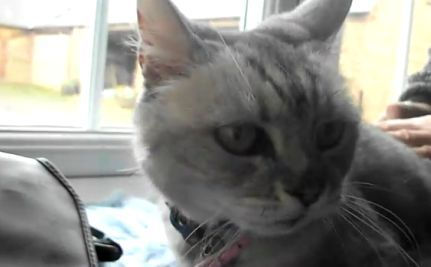 The Cat That Roars (Like a Lawnmower) (VIDEO)