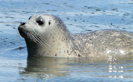 Baby Seal Released Back Into The Wild (VIDEO)
