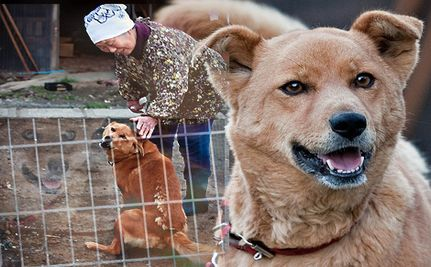 Animals Are Starving In The Fukushima No-Go Zone (Video)