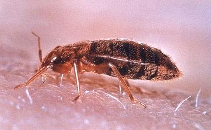 "Bed Bug Epidemic May Lead to ""Superbug"" Epidemic"