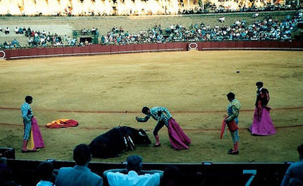 Ecuador Votes on Bullfighting Ban