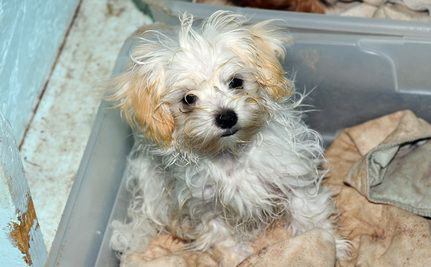 Don't Let The Texas Puppy Mill Bill Die