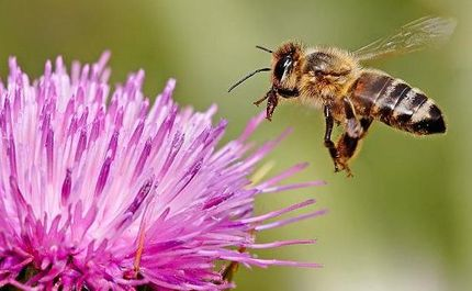 Our Phone Calls May Be Killing the Bees