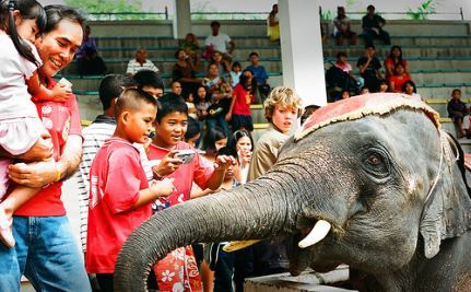 Dogs, Dolphins and … Elephant Therapy for Autistic Children?