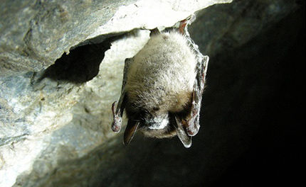 Tell Congress to Fund Efforts to Save Bats