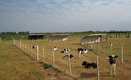 Victory! Florida's Ag Gag Bill Fails