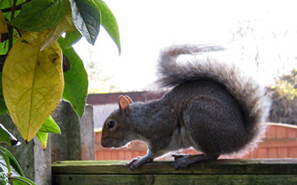 Adorable Orphaned Squirrels Released Into Wild – VIDEO