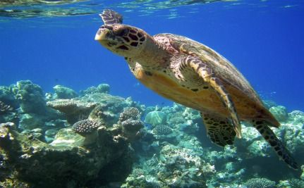 Coral Reefs and Cancer: Coral Reefs Saved My Life