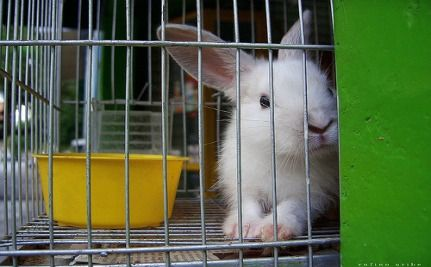 Pet Rabbits Get a RAW Deal: 75% Poorly Cared For in the UK (VIDEO)